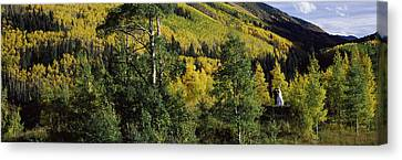 Newlywed Couple In A Forest, Aspen Canvas Print