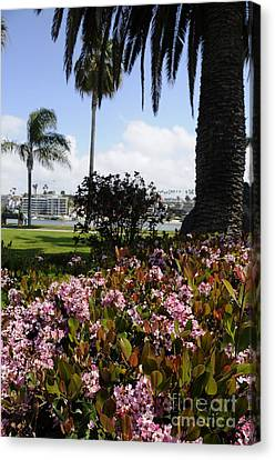 Newport Beach California Canvas Print by Timothy OLeary