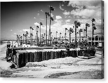 Newport Beach Dory Fishing Fleet Black And White Picture Canvas Print
