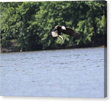 Nice Catch Canvas Print by Bruce  Morrell