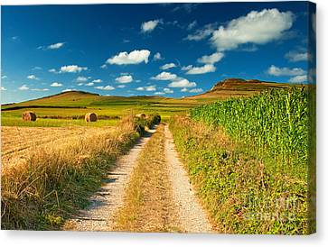 Canvas Print featuring the photograph Nice Landscape Summer by Boon Mee