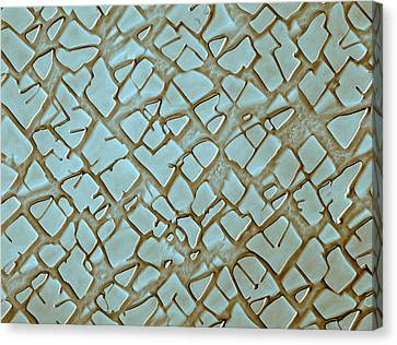 Nickel Alloy, Sem Canvas Print by Omikron