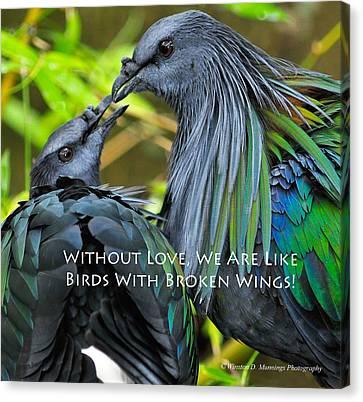 Nicobar Pigeon Canvas Print