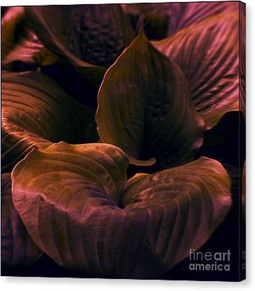 Night Abyss Canvas Print by Jean OKeeffe Macro Abundance Art