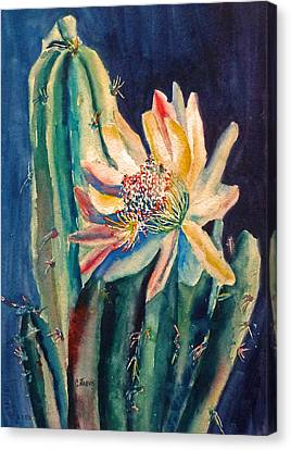 Night Blooming Cactus Canvas Print by Carolyn Jarvis