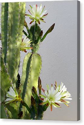 Night-blooming Cereus Canvas Print