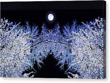 Night Blooms Canvas Print