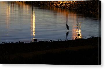 Canvas Print featuring the photograph Night Fishing - A Great Blue Heron  by Jane Eleanor Nicholas