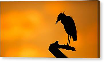 Night Heron Silhouette Canvas Print by Andres Leon