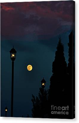 Night Lights Canvas Print by Lydia Holly