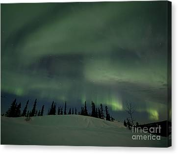 Night Lights Canvas Print by Priska Wettstein