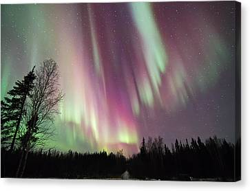 Night Of Colour Canvas Print
