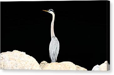 Night Of The Blue Heron  Canvas Print