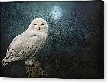 Night Owl Canvas Print by Brian Tarr