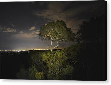 Night Glow Of A Tree Canvas Print by Alex King
