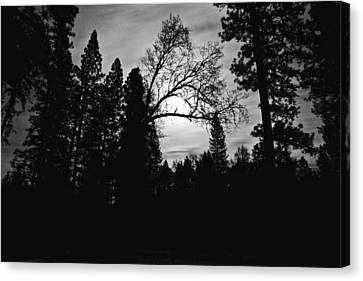 Night Shadows Canvas Print
