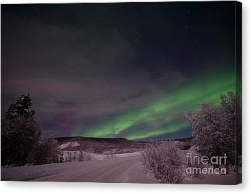 Night Skies Canvas Print by Priska Wettstein