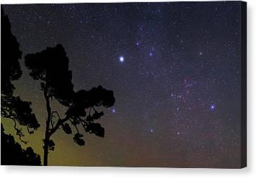 Night Sky Over Trees Canvas Print by Babak Tafreshi