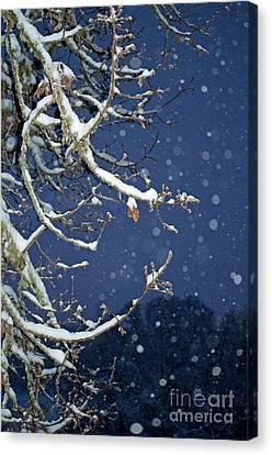 Canvas Print - Night Snow by Gwyn Newcombe