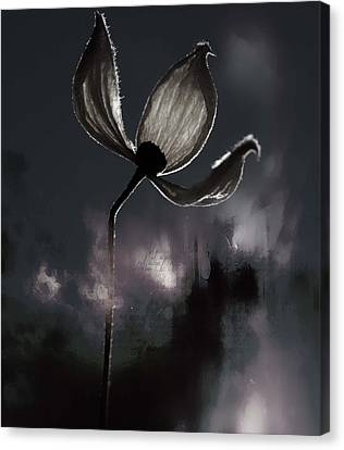 Nights I Wrote  Canvas Print by Jerry Cordeiro