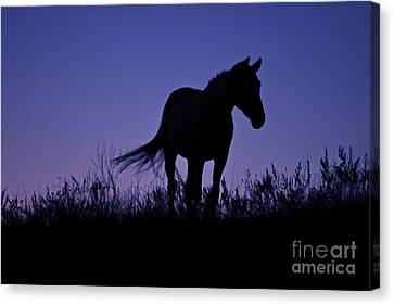 Nights Of Freedom Canvas Print by Kate Purdy