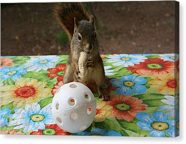 Canvas Print featuring the photograph Ninja Squirrel by Paula Brown