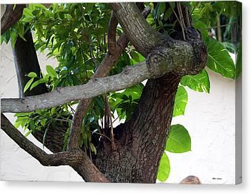 Canvas Print featuring the photograph Nispero Tree by Rafael Salazar