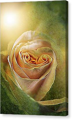 Macro Canvas Print - No Assignment by Shirley Sirois