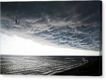 No Fear - Beach Art By Sharon Cummings Canvas Print by Sharon Cummings