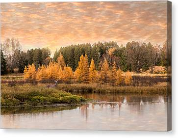 Tamarack Buck Canvas Print