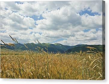 Divine Breath Canvas Print - Wheat In The Wind by Stefan Batog