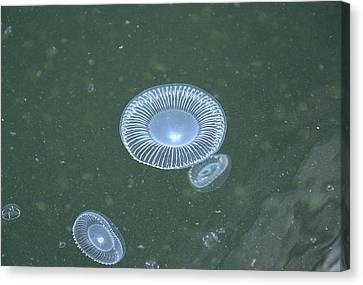 No Toast Just Jellies Canvas Print by Richard Henne