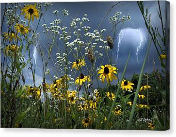 No Vase Needed Canvas Print by Bill Stephens