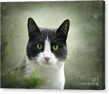 Nobody Knows The Troubles I've Seen Canvas Print by Ellen Cotton
