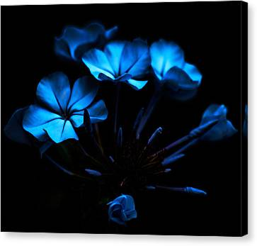 Nocturnal Blue Canvas Print