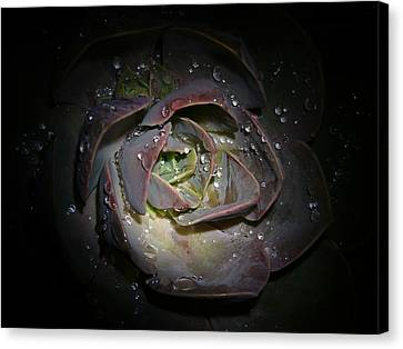 Nocturnal Diamonds Canvas Print