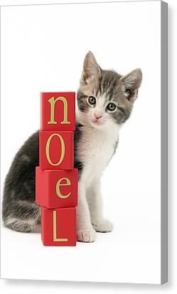 Noel Kitten Canvas Print