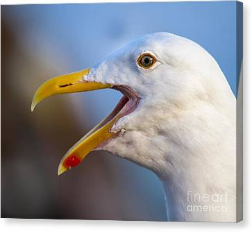 Canvas Print featuring the photograph Noisy One by Dale Nelson