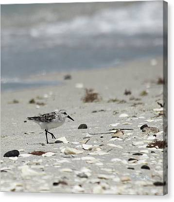 Nokomis Beach Piper Canvas Print