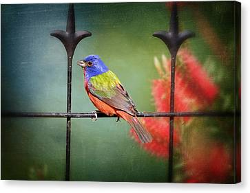 Nonpareil En Louisiane Canvas Print by Bonnie Barry