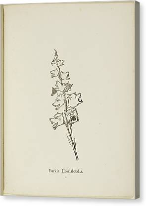Nonsense Botany By Edward Lear Canvas Print by British Library