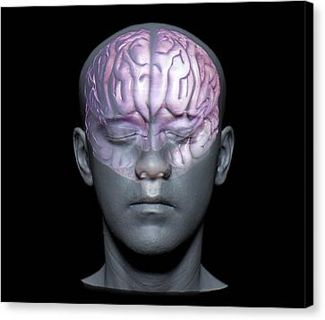 Normal Canvas Print - Normal Brain by Zephyr