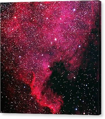 North American Nebula Canvas Print