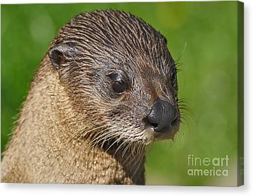 North American River Otter Canvas Print by Lynne Sutherland