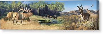 Pronghorn Antelope Canvas Print - North American Waterhole by Rob Corsetti