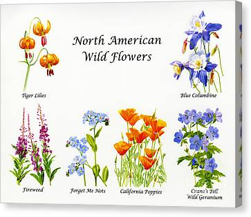 North American Wild Flowers Poster Print Canvas Print by Sharon Freeman
