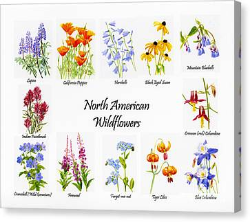 North American Wildflowers Poster II Canvas Print by Sharon Freeman