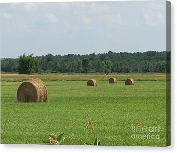North Country Haystacks Canvas Print by Kevin Croitz