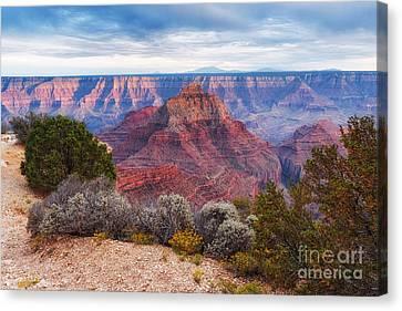 Northern Arizona Canvas Print - North Rim Grand Canyon Arizona Desert Southwest Solitude At Cape Royal by Silvio Ligutti