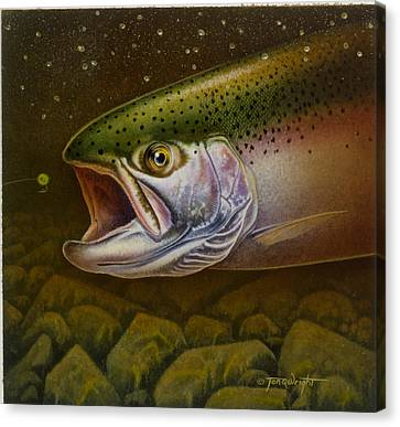 North Shore Steelhead Canvas Print by Jon Q Wright